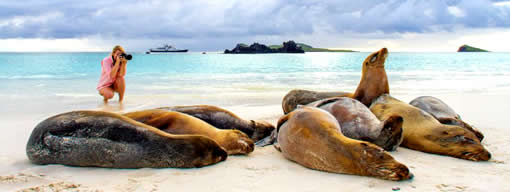 Sea lions, Galápagos Islands
